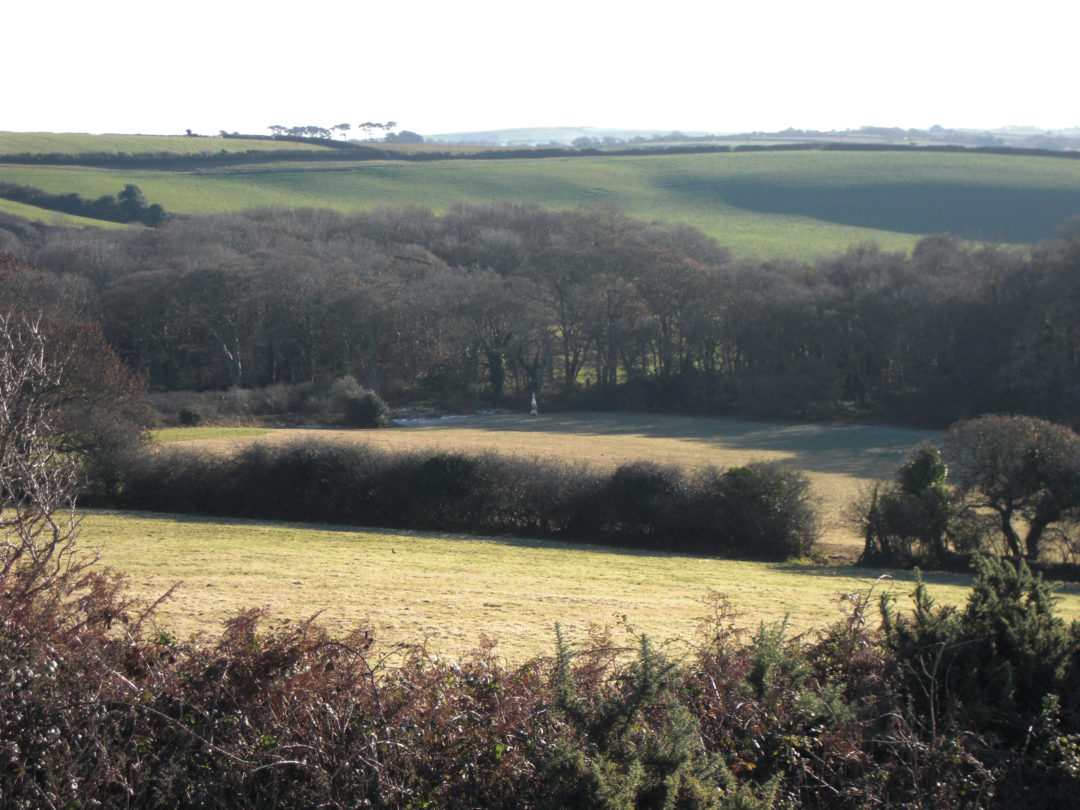 A view across the farm