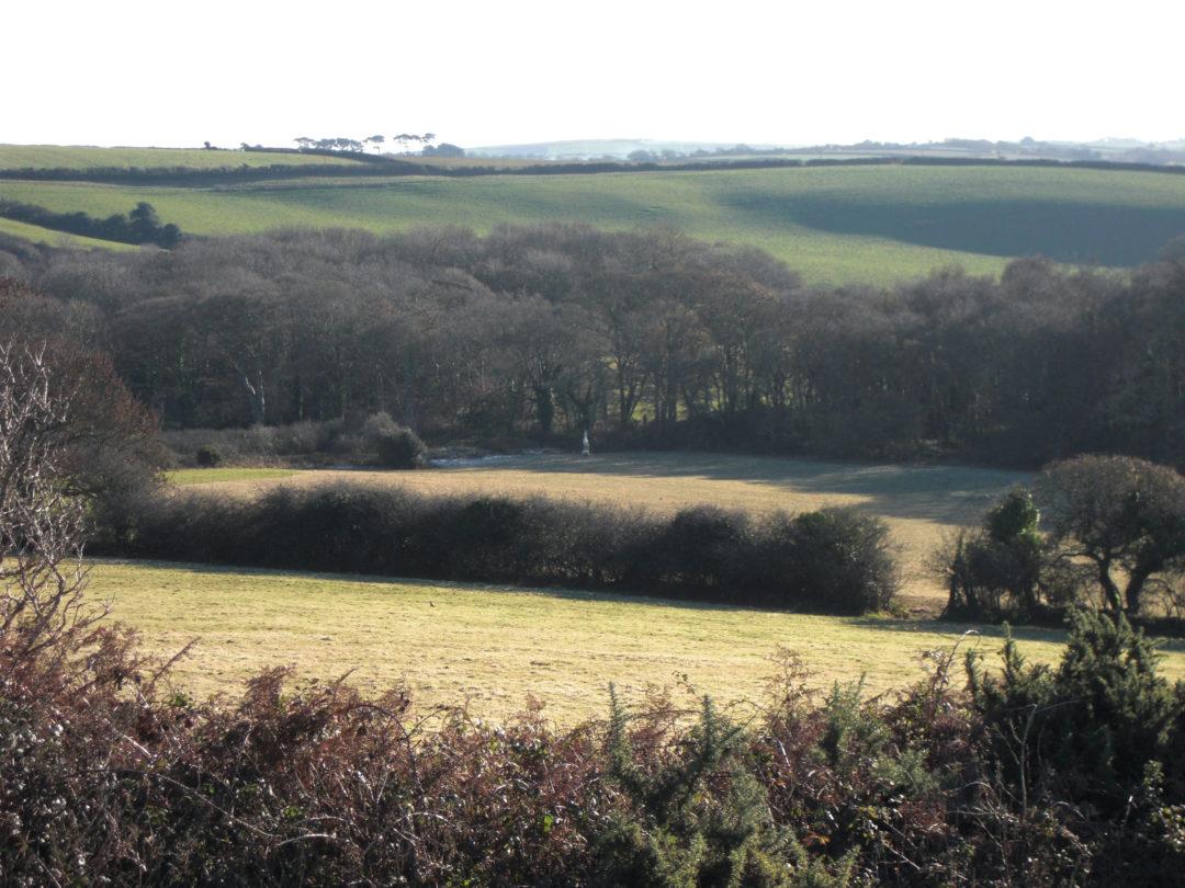 A view across the farm